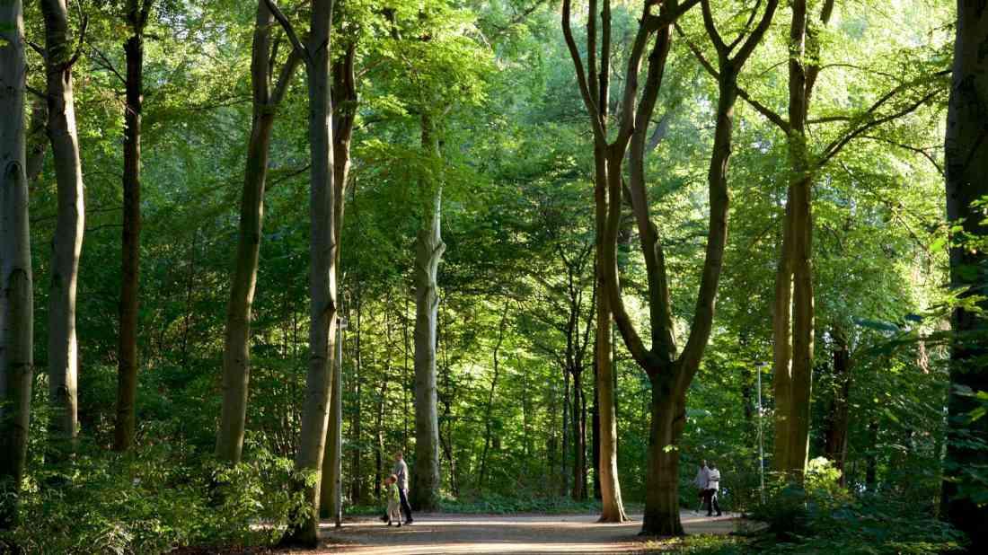 غابة إيلنريد في هانوفر