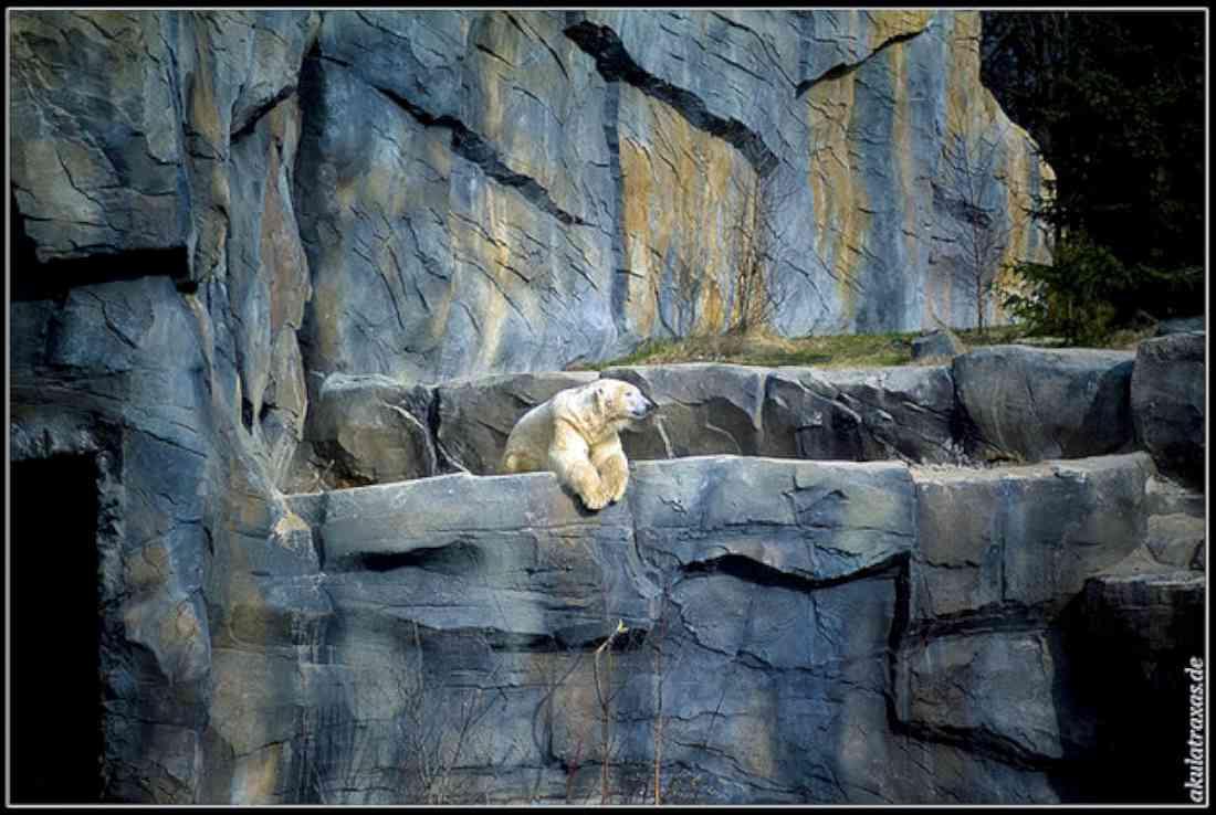 حديقة الحيوان في هانوفر