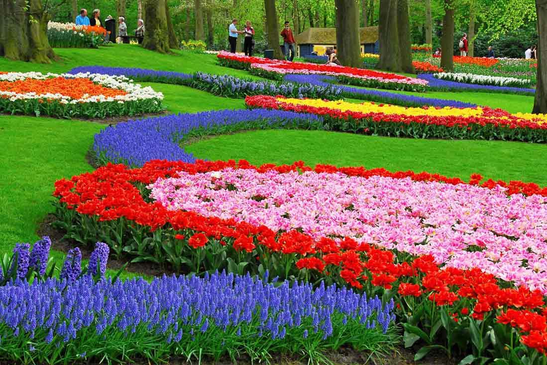 حديقة كيوكينهوف في هولندا.