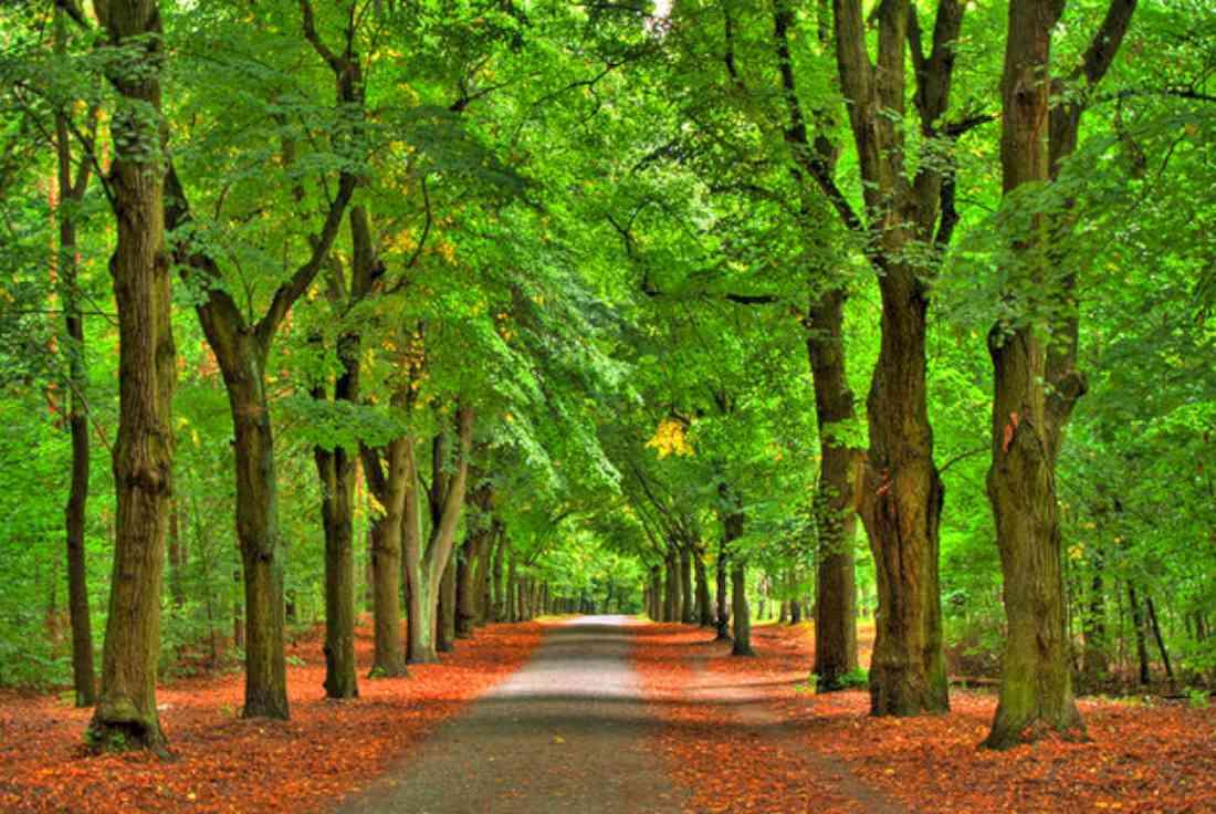 غابة غرونيوالد (غرينوود) برلين