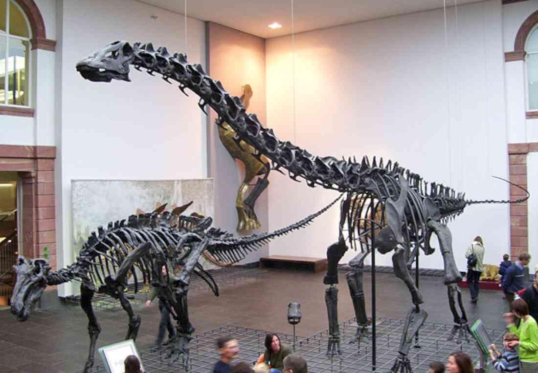 سينكنبرغ - متحفالتاريخ الطبيعي فرانكفورت