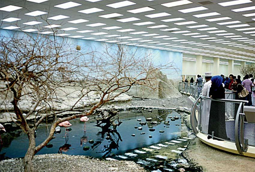 مركز حيوانات شبه الجزيرة العربية بالإمارات.