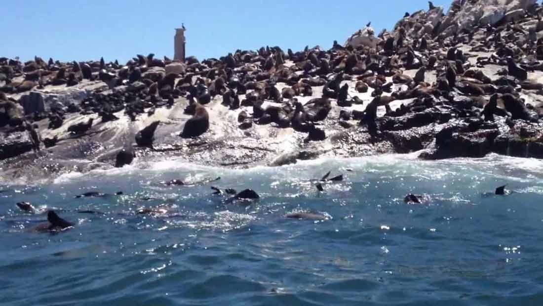 جزيرة أسود البحر كيب تاون