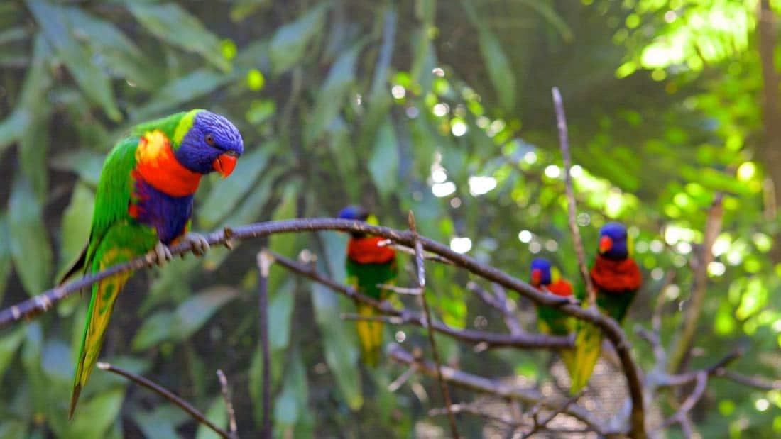 حديقة نهر يومجيني للطيور