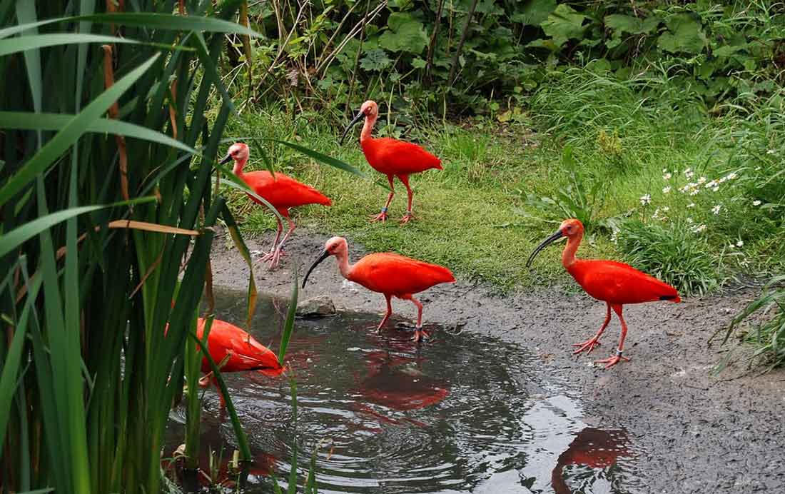 حديقة حيوان روتردام