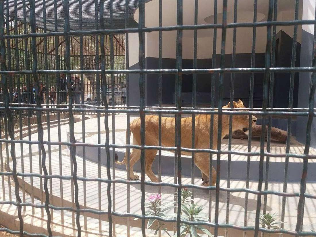 """حديقة الحيوانات """"التوتة"""""""