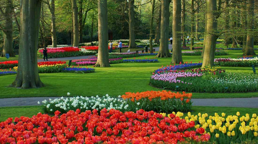 حديقة كيوكينهوف في هولندا : موطن الزهور الأول في العالم